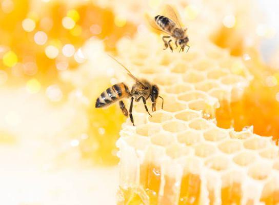 Производство и продажа мёда